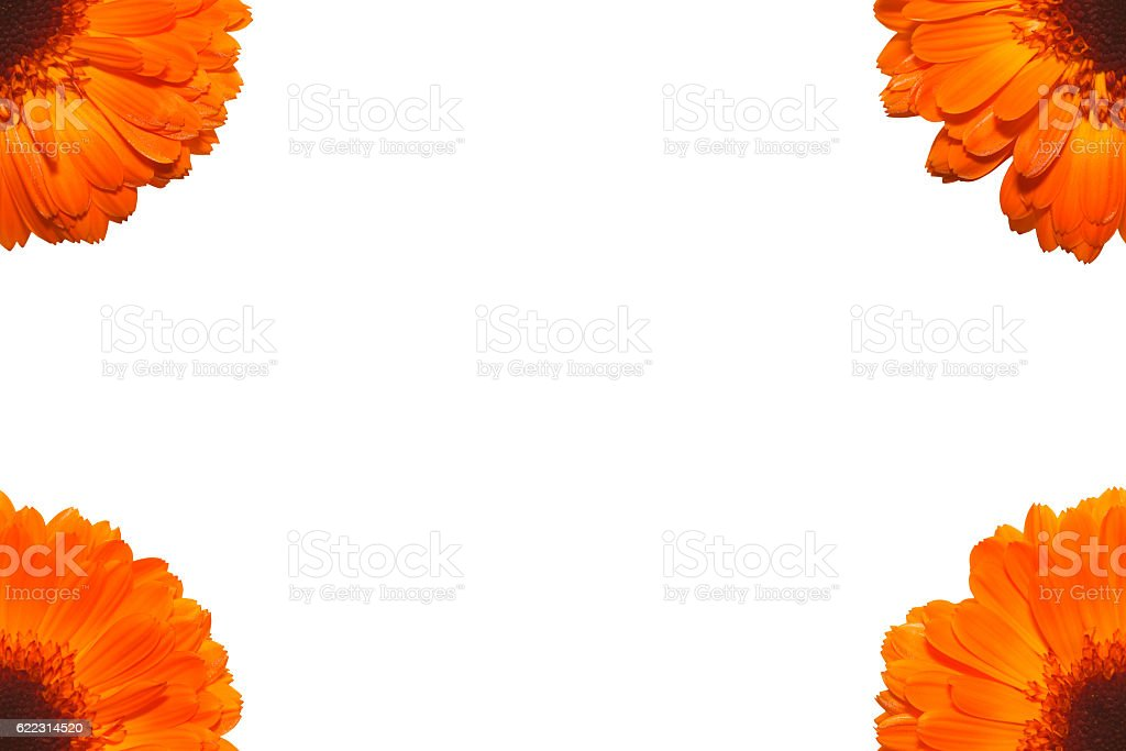 Ringelblume stock photo