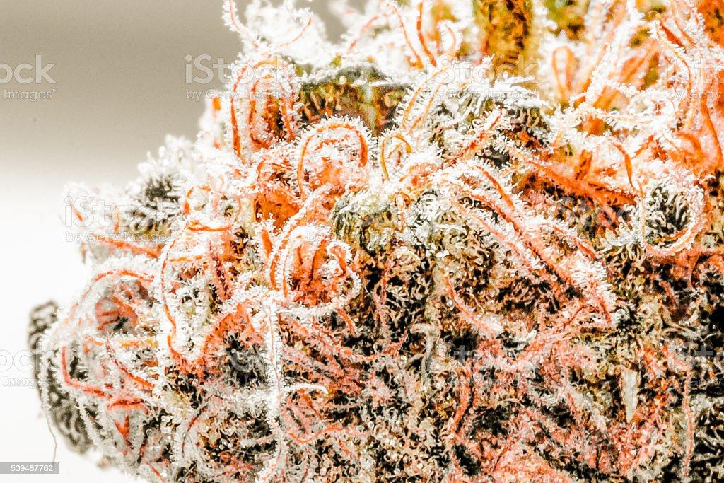 Mari-hairy-juana stock photo