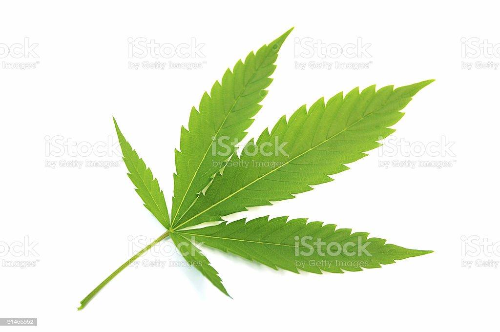 Marihuana leaf. royalty-free stock photo