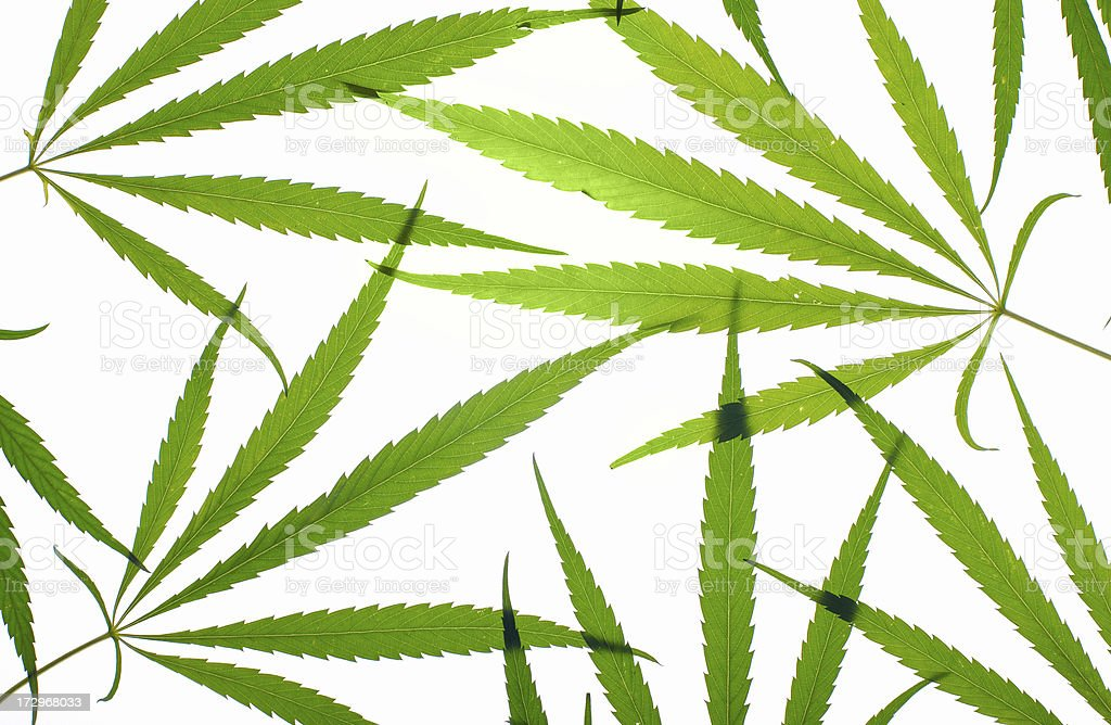 marijuana background royalty-free stock photo