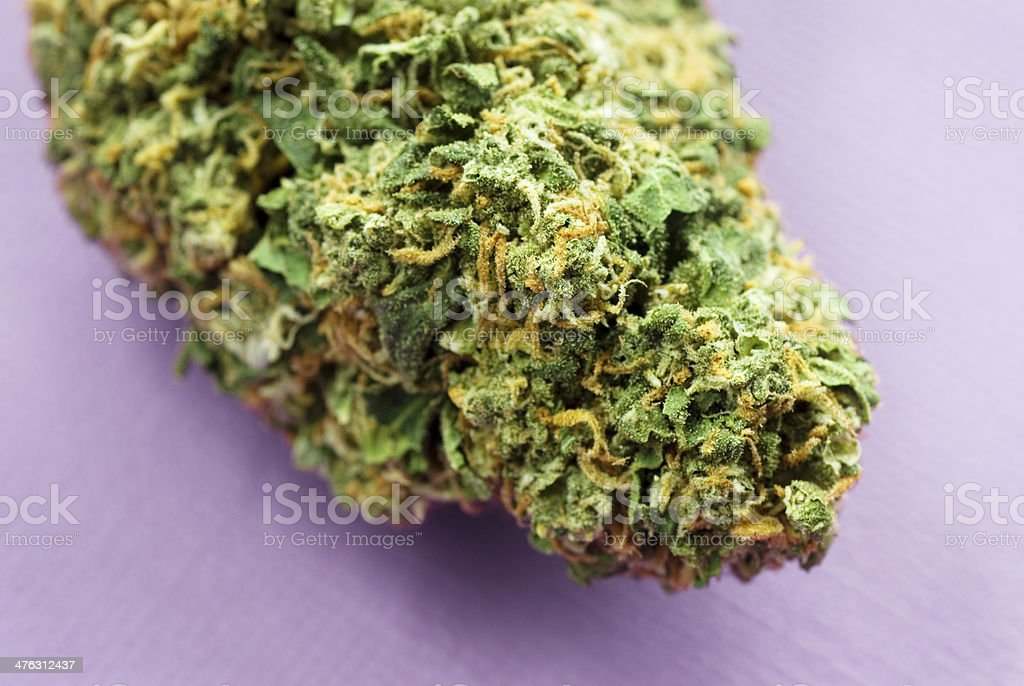 marijuana bud on purple royalty-free stock photo