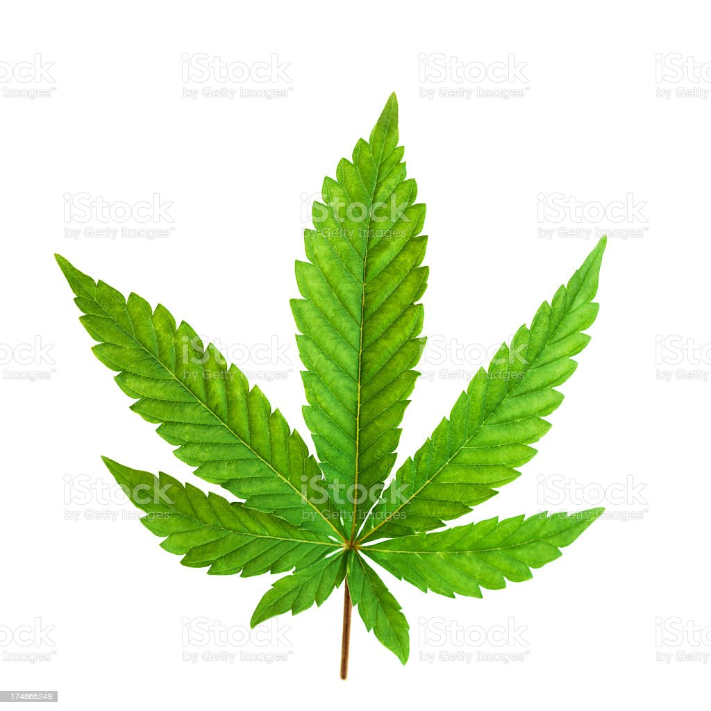 Marijuana leaf isolated on a white royalty-free stock photo