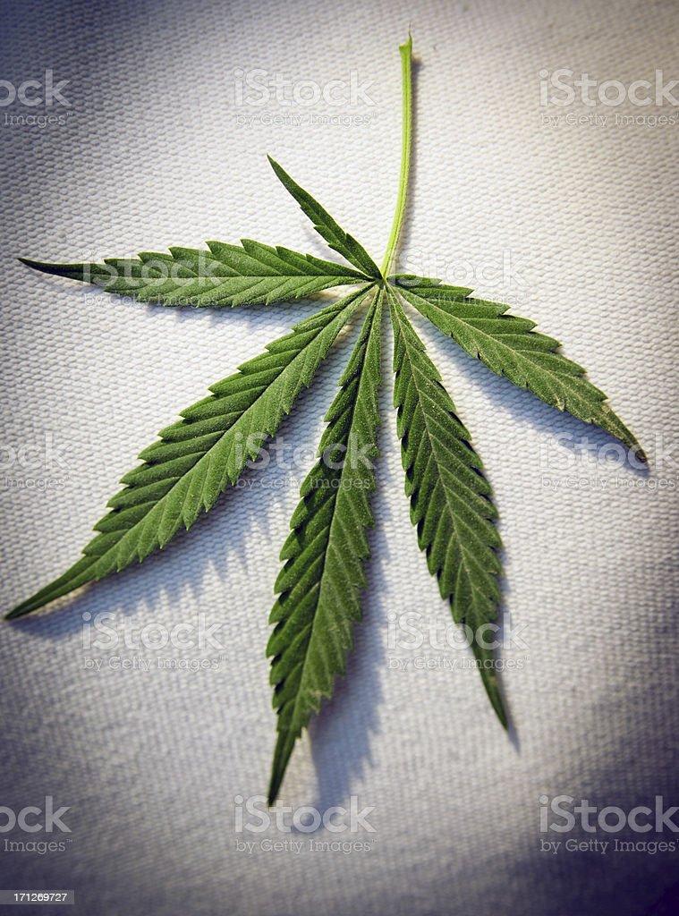 Marijuana Leaf stock photo