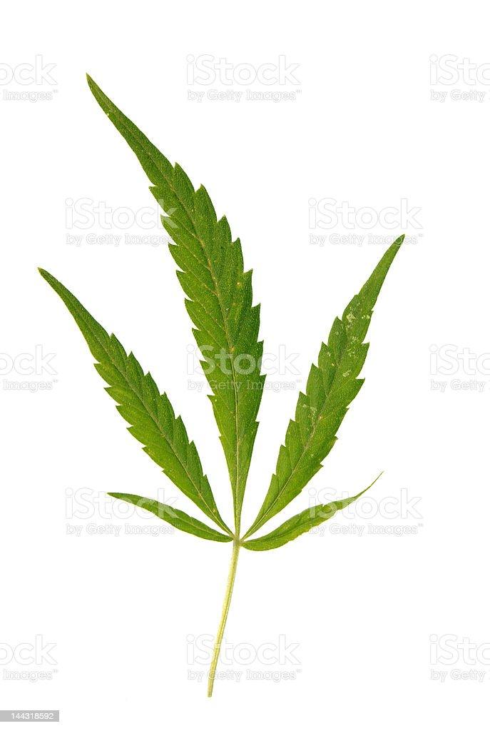 marijuana leave isolated royalty-free stock photo