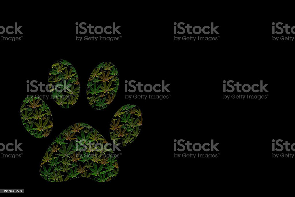 Marijuana Paw Print stock photo
