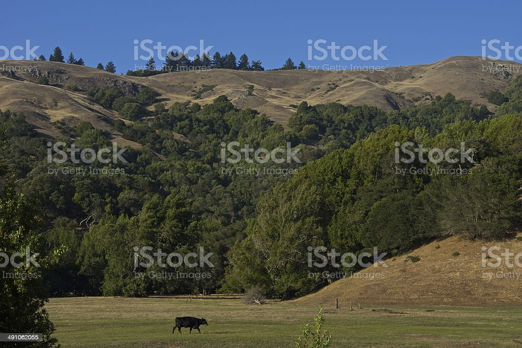 Marin Meadow stock photo