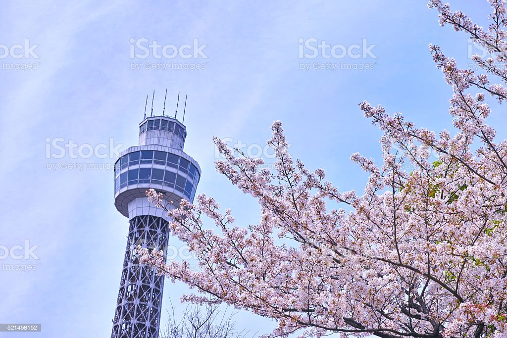 Marin Tower and Sakura stock photo