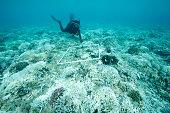 marine biologist surveys bleached reef