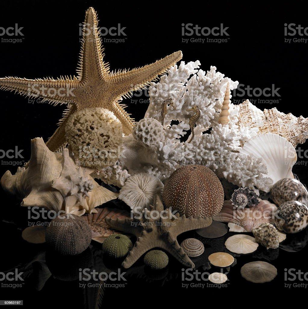 marine decoration royalty-free stock photo