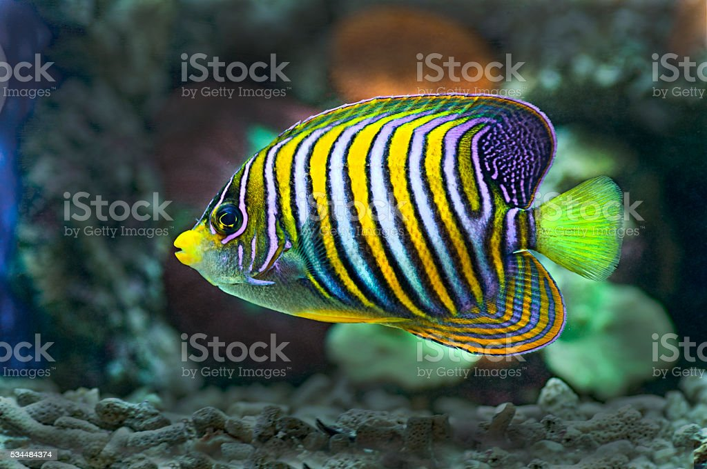 marine fish with coral as the background stock photo