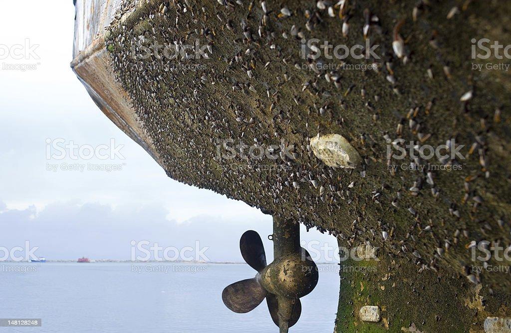 marine fouling stock photo