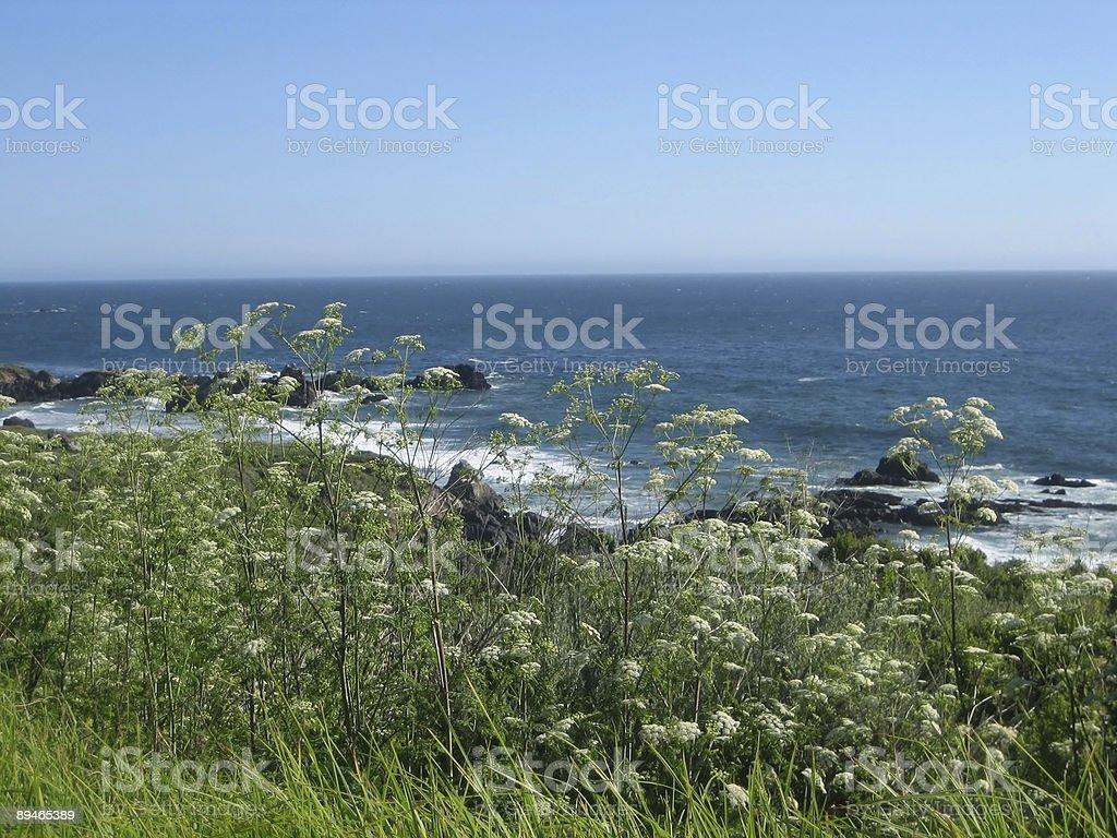 Marine landscapes royalty-free stock photo