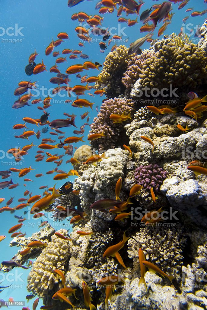 Marine life on the coral reef stock photo