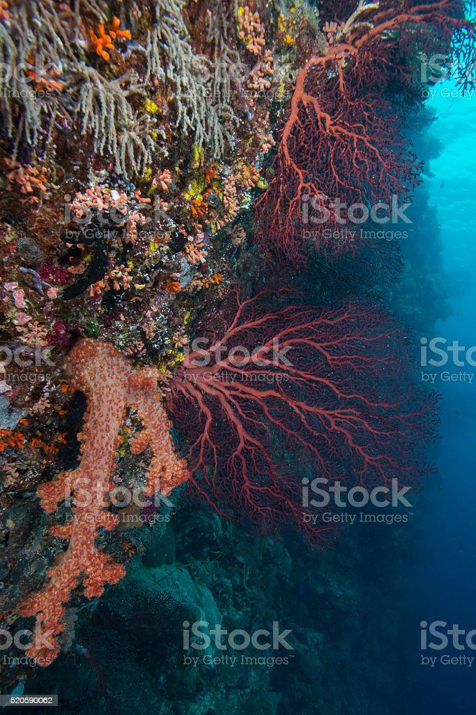 Marine life - Palau, Micronesia stock photo