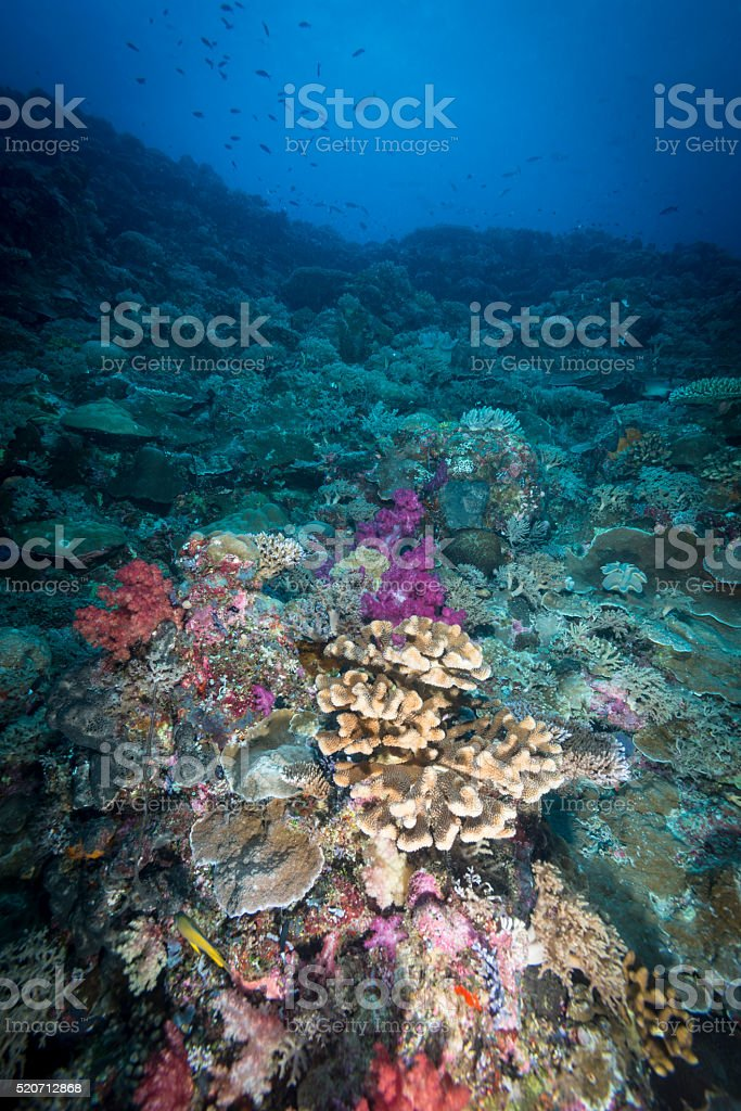 Marine life - Palau, Micronesia - stock photo