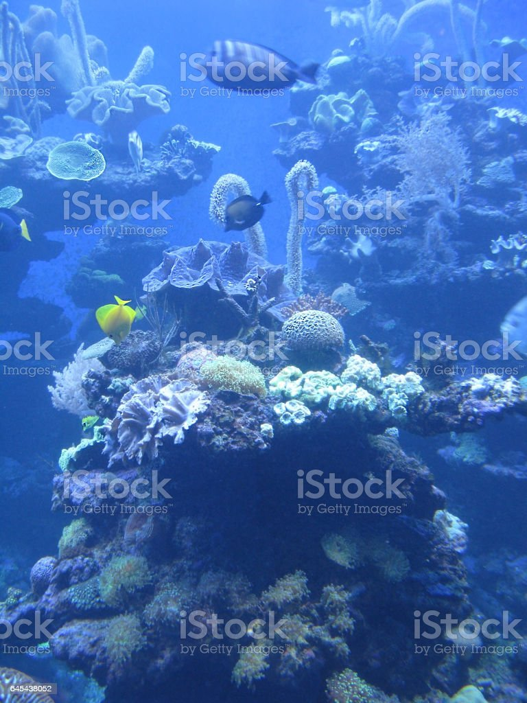 Marine life underwater digital photoshop illustration based on original photograph. stock photo