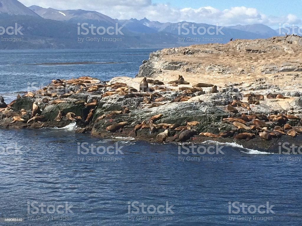Marine lions laze in the sun in their habitat stock photo