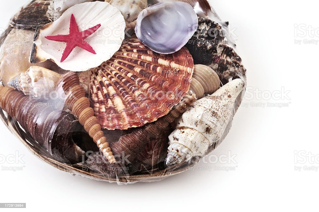 marine shells and red sea star wrapped with transparent film stock photo
