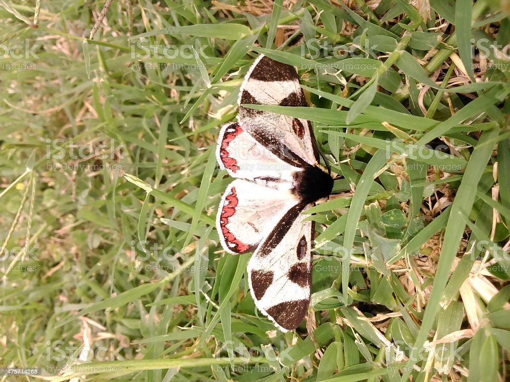 mariposa foto de stock libre de derechos