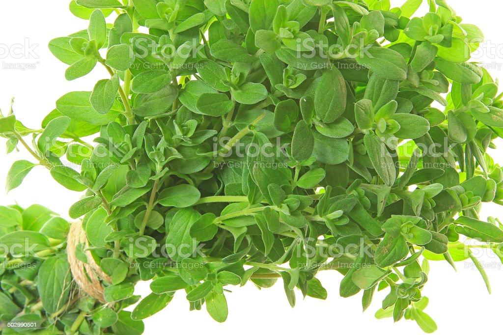 Marjoram (Origanum majorana) stock photo