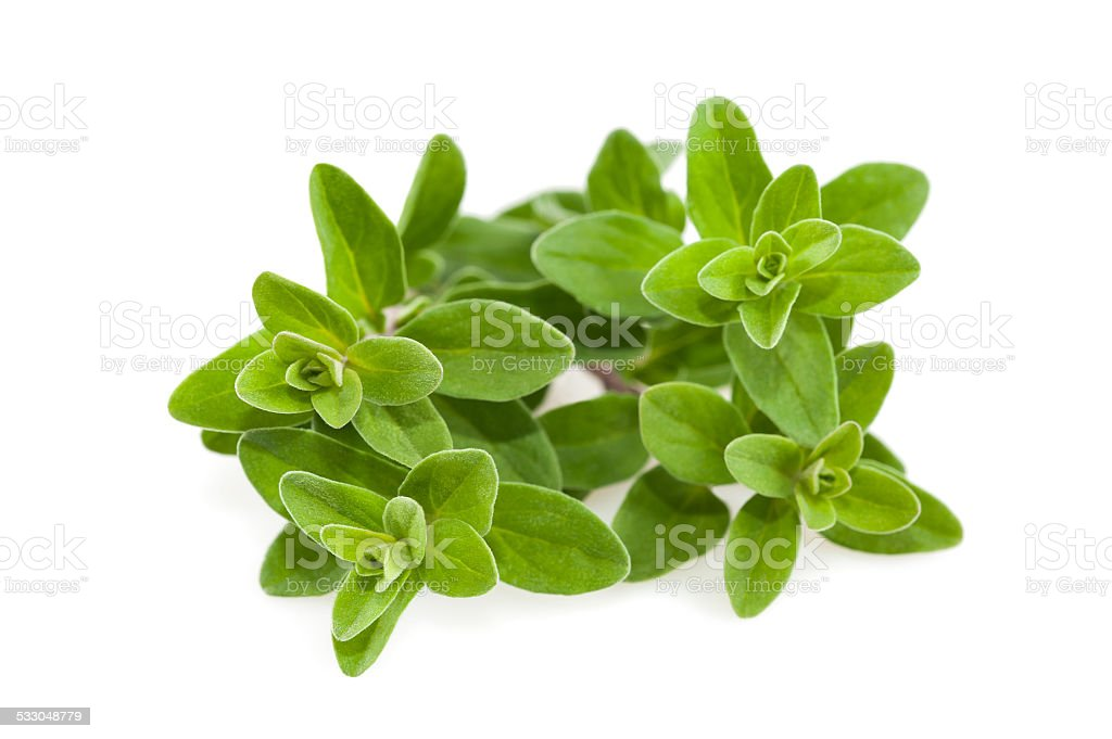 marjoram stock photo