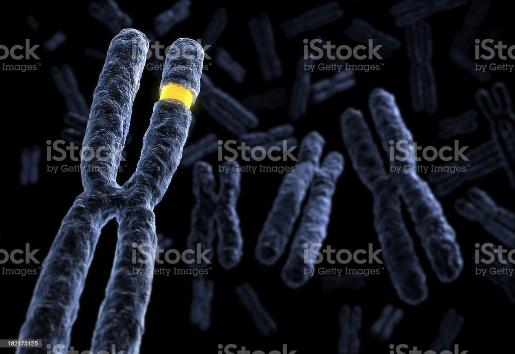 Marked Chromosome stock photo