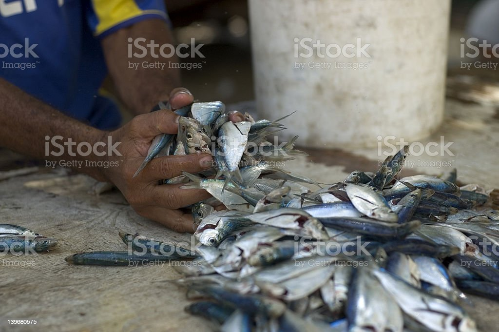 market fish royalty-free stock photo
