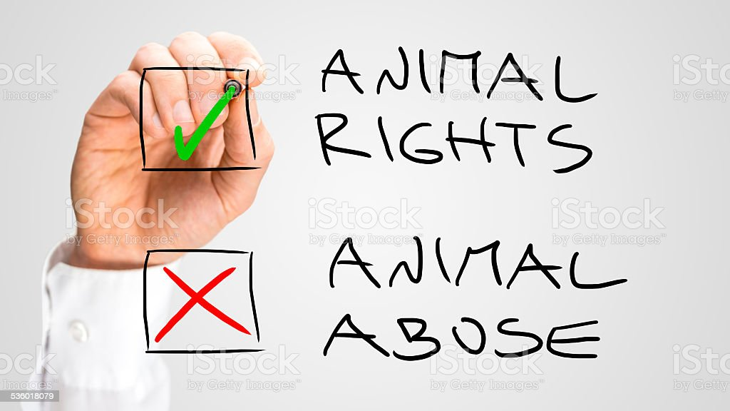 Marking Check Boxes for Animal Rights and Abuse stock photo