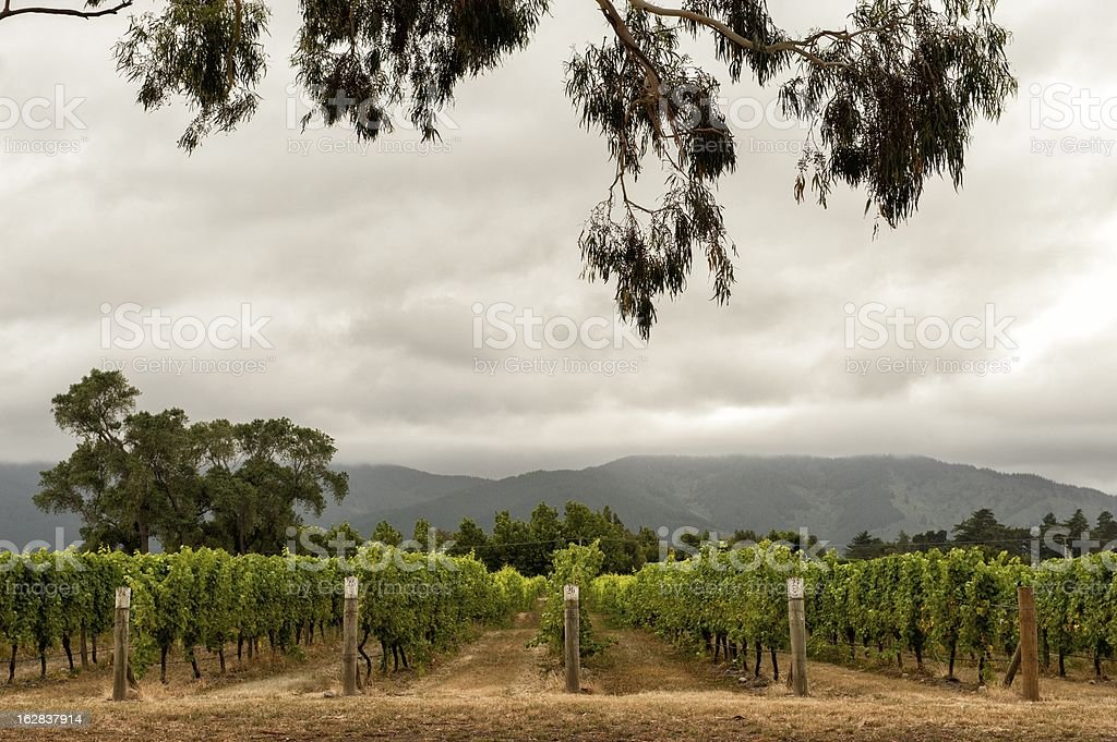 Marlborough wine country on a cloudy day stock photo