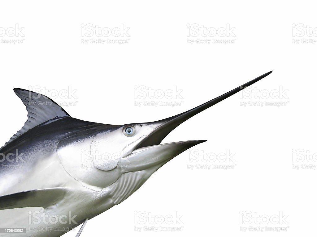 Marlin fish - Swordfish stock photo