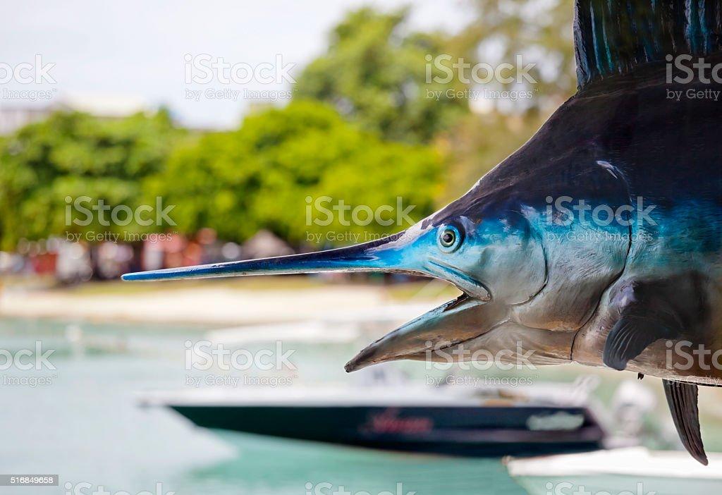 Marlin Fishing Mauritius stock photo