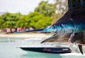Marlin Fishing Mauritius