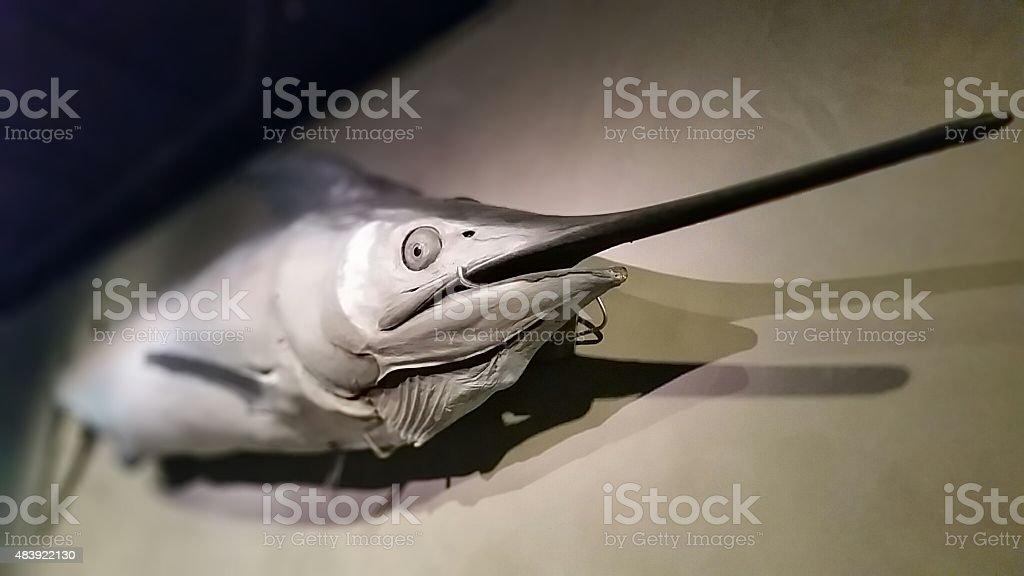 Marlin on a wall stock photo