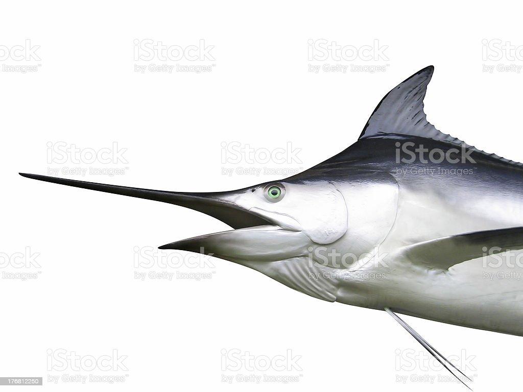 Marlin - Swordfish royalty-free stock photo