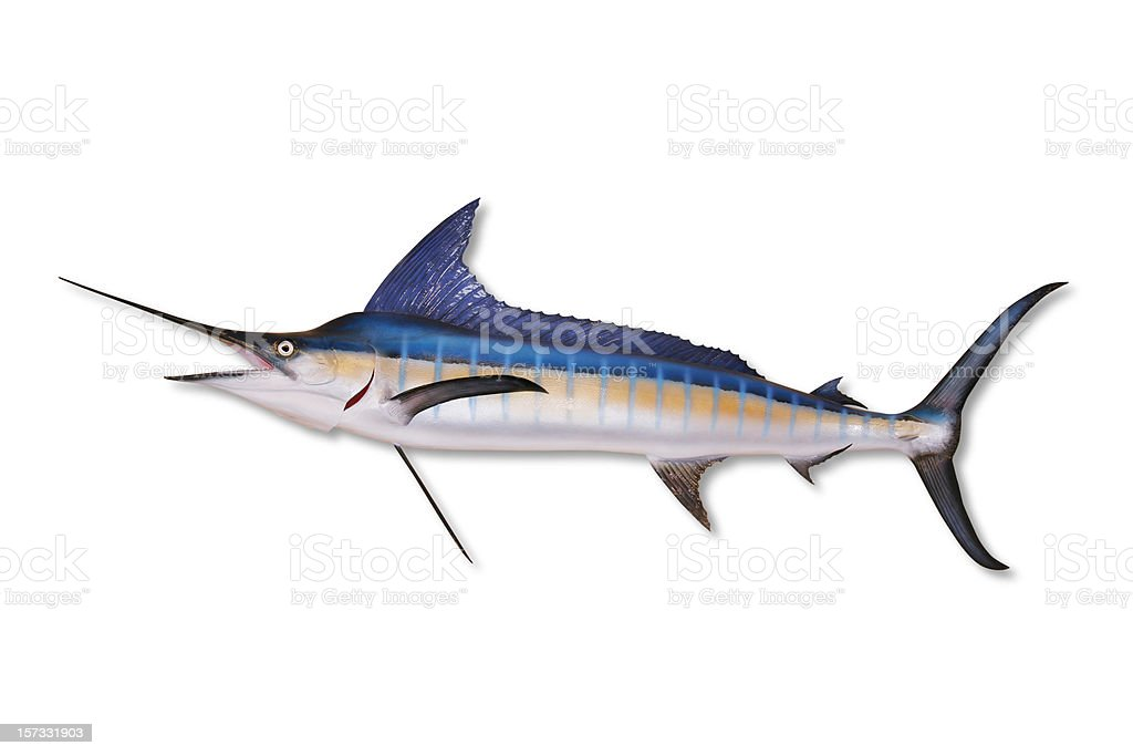 Marlin with Clipping Path stock photo