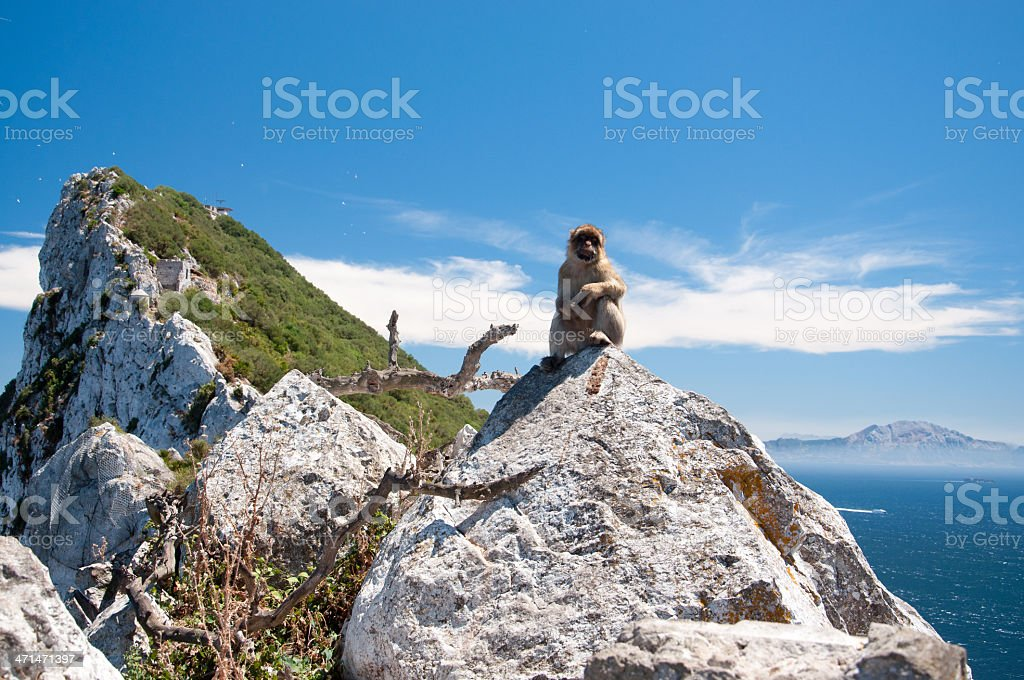 Marmoset in Rock of Gibraltar stock photo