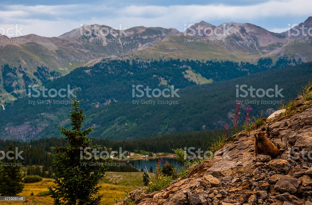 Marmot Sitting on a Cliff Overlooking Rocky Mountain National Bliss stock photo