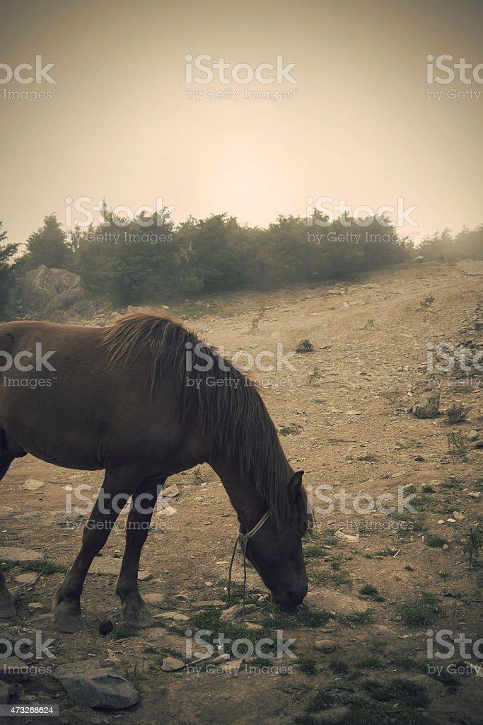 Maroon Horse stock photo