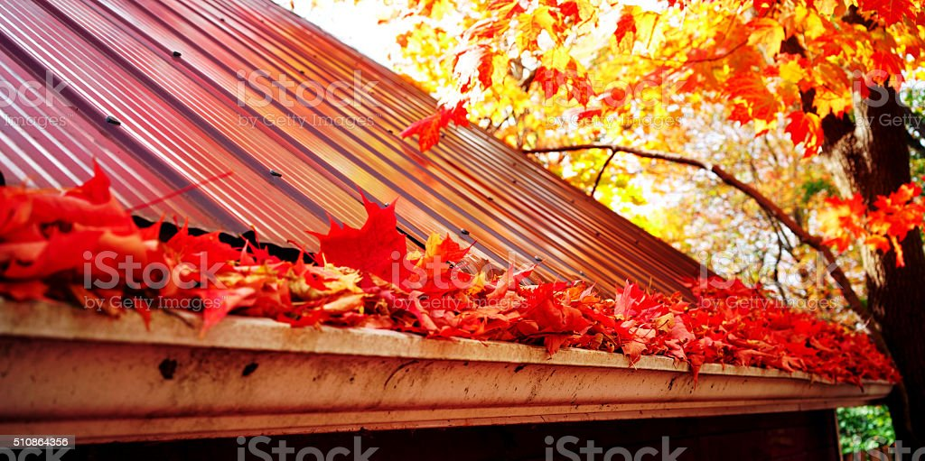 Marple leaves in gutter, fall time stock photo