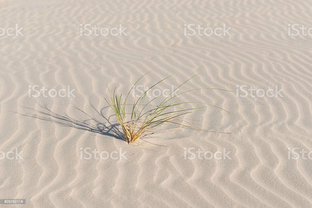 Marram grass on a finely corrugated Beach. stock photo