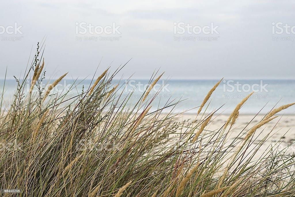 Marram grass, sea and sand on an island coastline stock photo