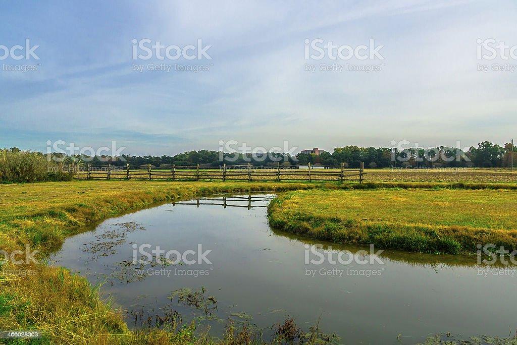 Marsh and Grassy Field stock photo