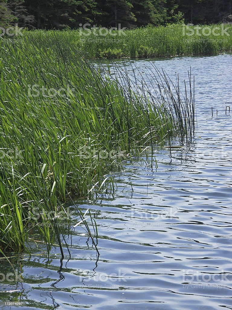 marsh and water royalty-free stock photo