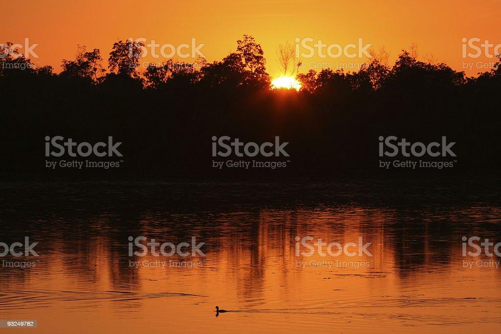 Marsh at sunset stock photo