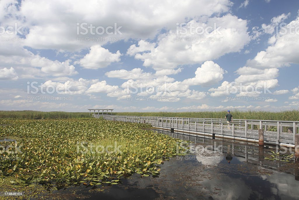 Marsh Boardwalk in Point Pelee National Park royalty-free stock photo