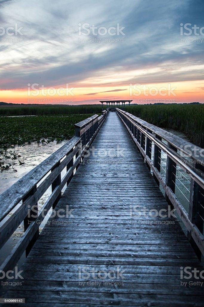Marsh Boardwalk - Point Pelee National Park stock photo