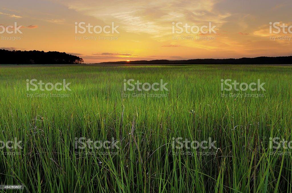 Marsh Grass at Sunrise stock photo