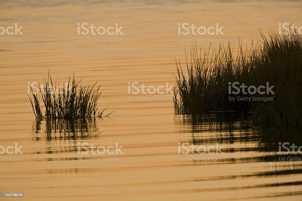 Marsh grass at sunset stock photo