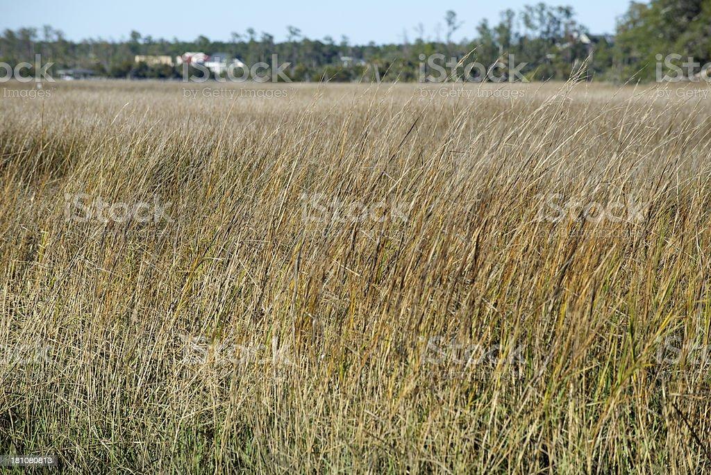 Marsh Grass royalty-free stock photo