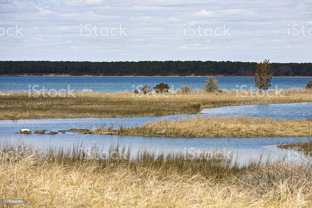 Marsh in early Spring stock photo